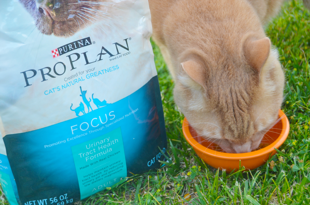 dexter-eating-proplan